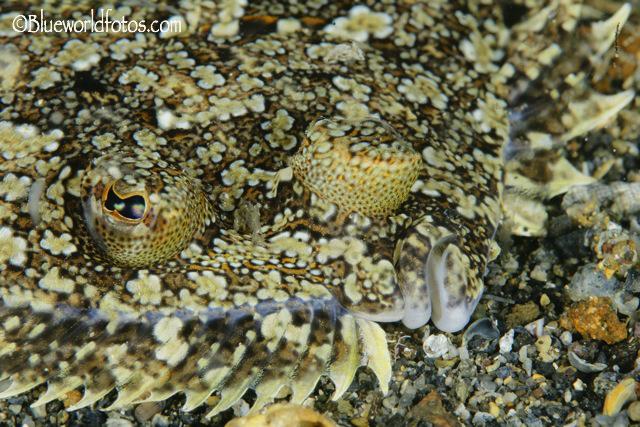 I Open Fotosub Arrecife ciudad del mar
