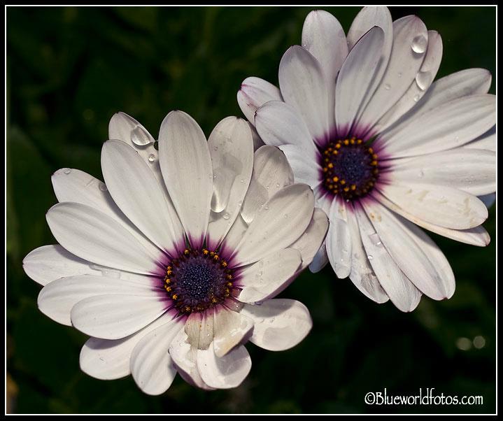 Flores en colores