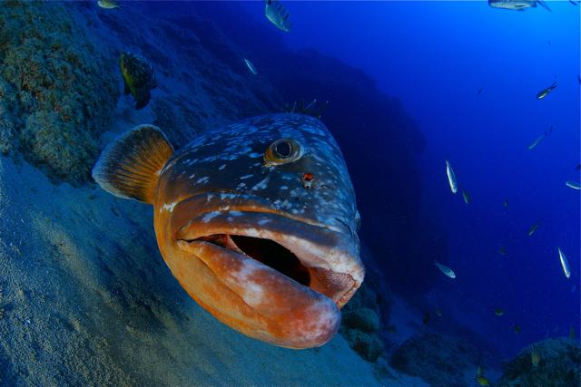 El mero Félix (Félix the grouper)