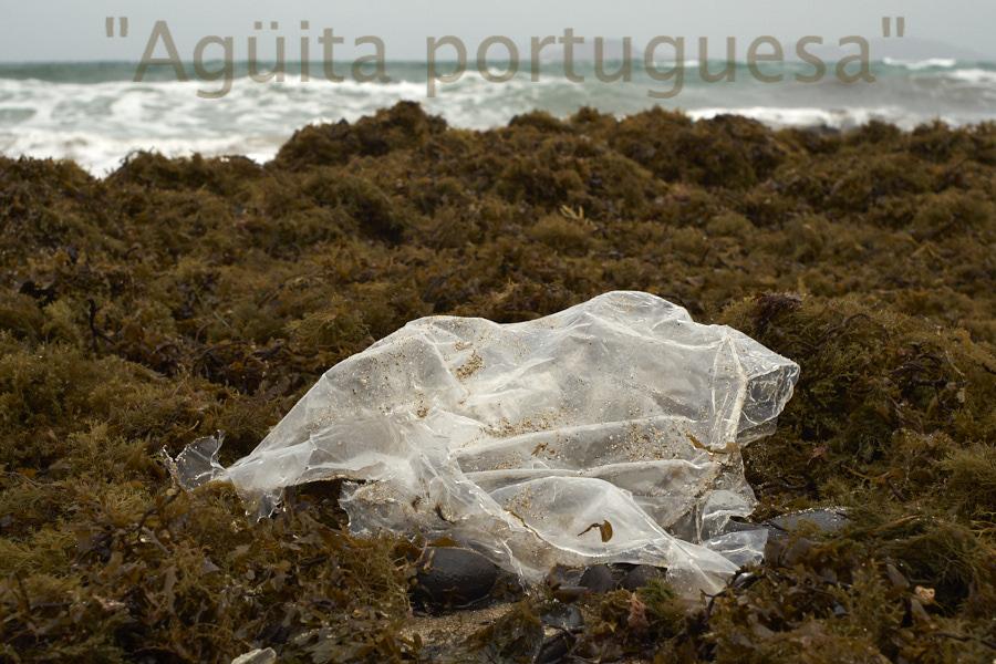 Medusas plásticas