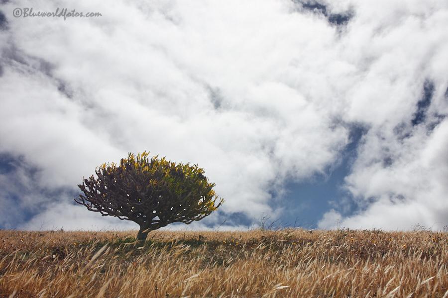 Cumbres Lanzaroteñas